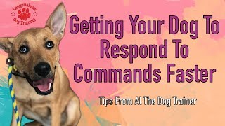 Getting Your Dog To Respond To Commands Faster - Tips From Al The Dog Trainer