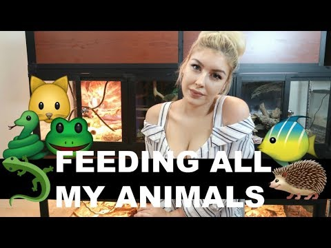 Feeding All My Pets in One Video 🐾
