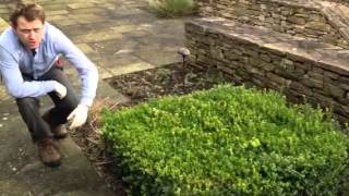 Plant Id Guide - Box Hedging/topiary