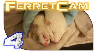 FerretCam - 4. Answers to Common Questions
