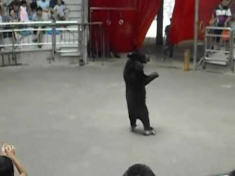 Roller Skating Bear - Hangzhou Zoo 2012