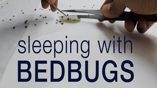 Kill bedbugs without pesticides: entomologist sleeps with bed bugs
