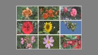 9분할 3D 영상꽃