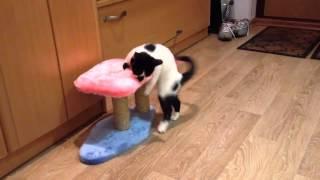 Пьяная кошка отжигает:) Funny cat