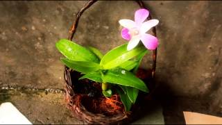 Diy Orchids in a Basket! Gardening tips