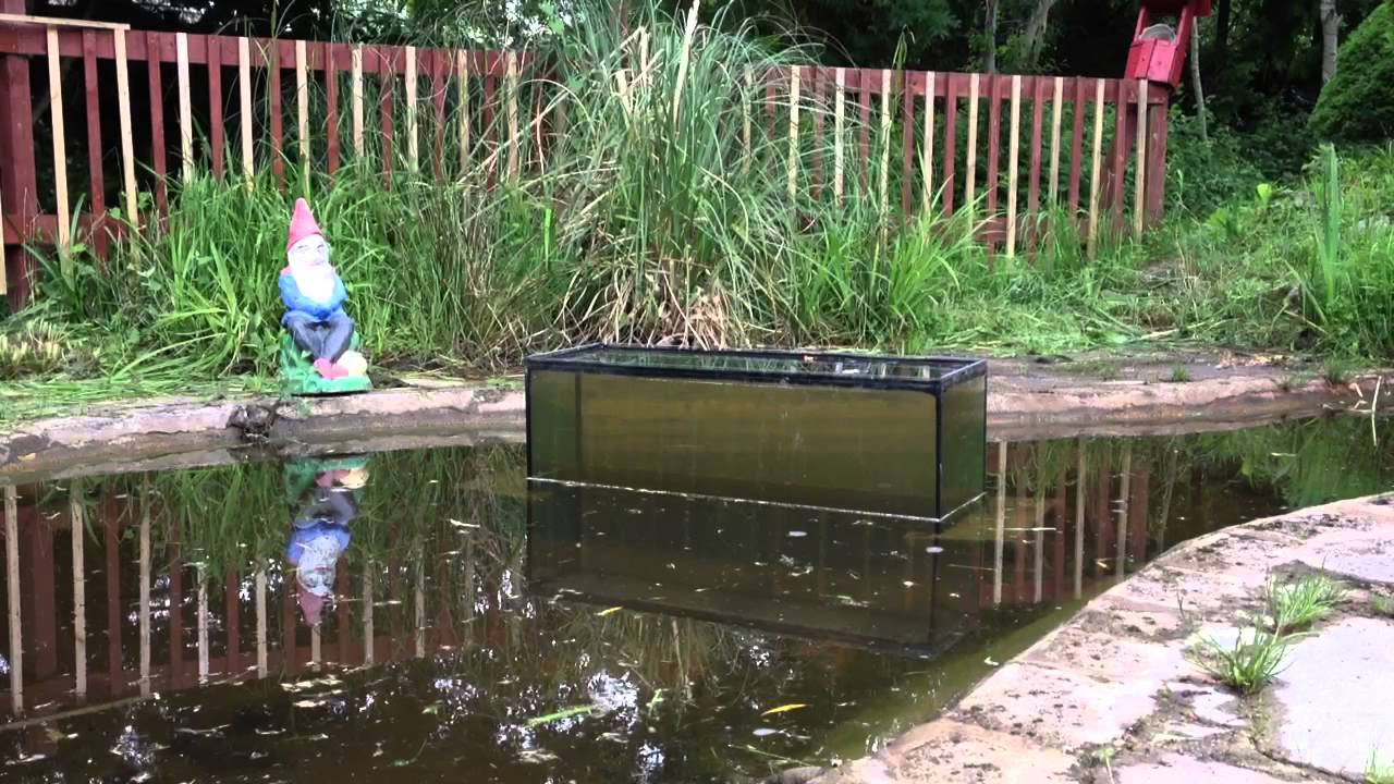 Fish tank in pond youtube for Fish tank in pond