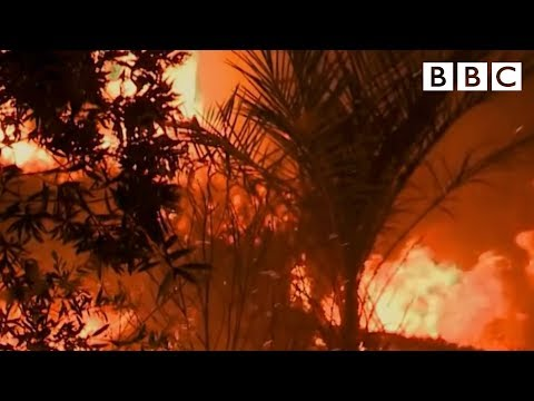 What is Palm Oil? - BBC