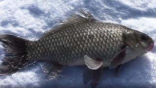 Рыбалка на Хапугу хлопок, Первая рыбалка 2020, Рыбалка на Амуре,