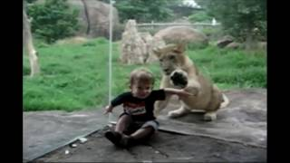 Kids at the Zoo Compilation: Funny Animal Reactions