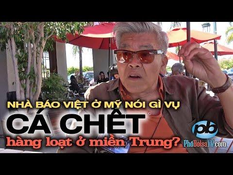 Nhà báo Việt ở Mỹ nói gì vụ cá chết hàng loạt ở miền Trung, Việt Nam?