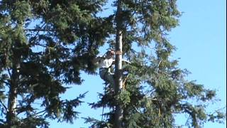 Tree Topping Fail - Tree Cutting Goes Horribly Wrong!