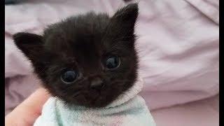 突然キャンプ場に現れた子猫。その痛々しい姿を放っておけず、保護。 thumbnail