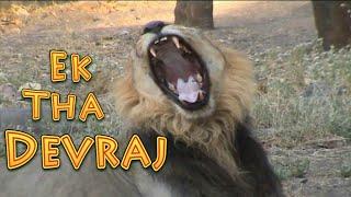 ek tha devraj  | GIR FOREST | Gir forest viral | GIR NATIONAL PARK | DEVALIYA SAFARI | ASIATIC LION