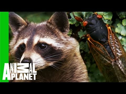 Amazing Animals Found In The Appalachian Outdoors!