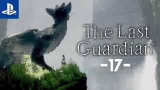W drodze do wieży #17 The Last Guardian   PL   Gameplay   Zagrajmy w