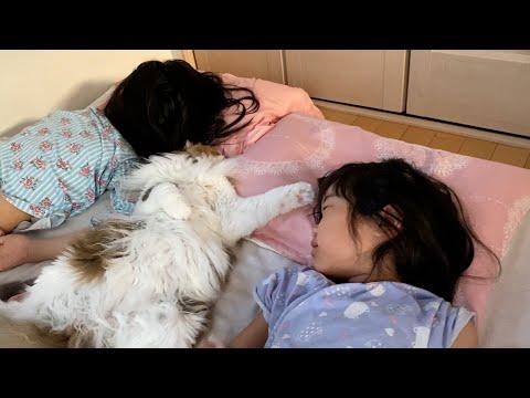 休日の朝の猫と娘達が幸せすぎます