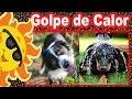 El Golpe de Calor en Los Perros - ¿Como Detectar, Quitar y Prevenirlo?