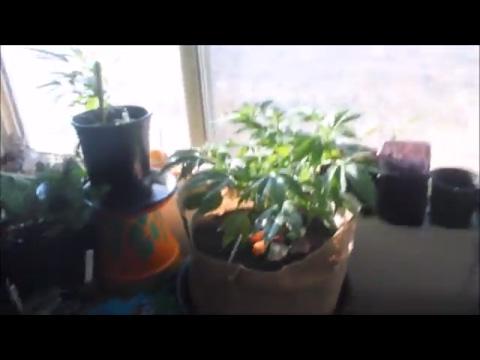 Grow Update // Urban Garden WIP // Vlog Sesh with Lovevibez