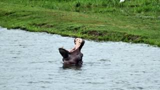 Day 12: Exploring the Dark Continent: Victoria Falls, Zimbabwe