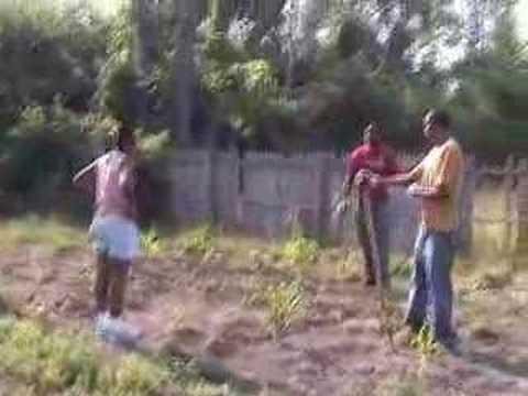 Infuse Detroit - Urban Farming