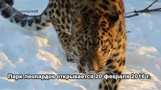Парк леопардов открывается 20 февраля 2016 г.