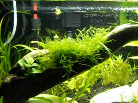 W.W. Low Light In Planted Tanks & W.W. Low Light In Planted Tanks - YouTube