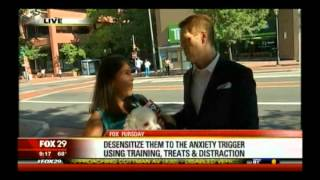 Pet Anxiety Tips With Jazz (the Dog) On Fox29 In Philly With Dana Humphrey The Pet Lady