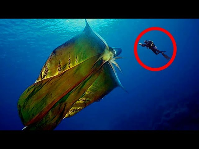 CREEPIEST Things Found In Nature!