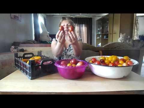 Засолочные сорта томатов!