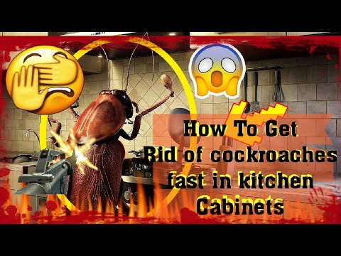 How To Get Rid Of Cockroaches Fast In Kitchen Cabinets