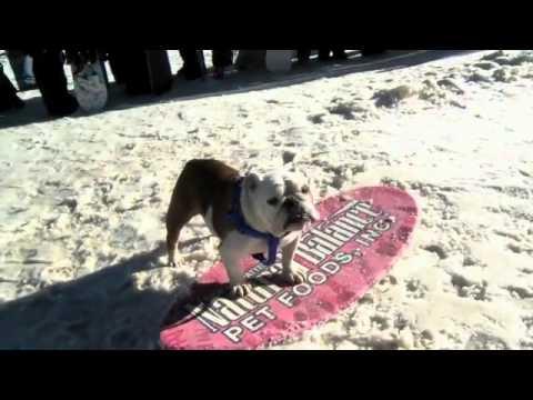 כלב גולש מדהים