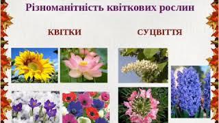 які рослини можуть слугувати годинником презентація