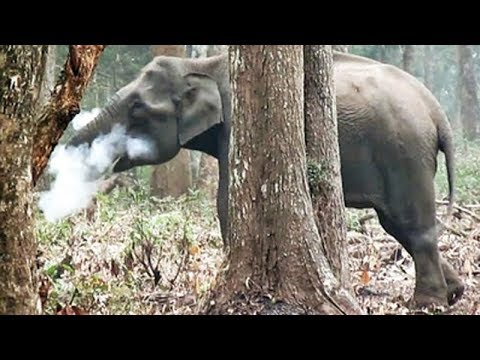 Watch: Smoking elephant clip spreads like wildfire