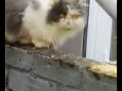 Ugliest Cat In The World - YouTube