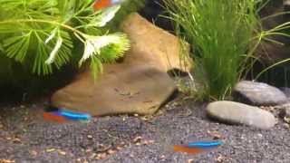LED fish tank - LED Aquarium