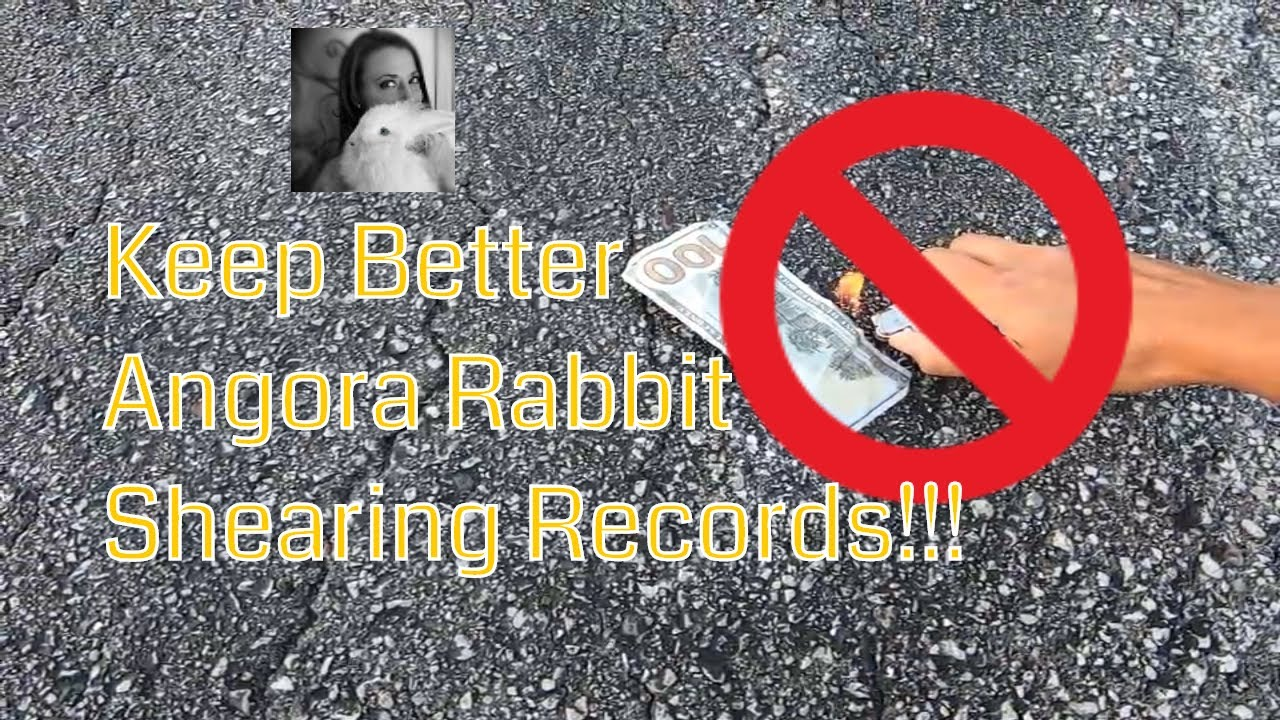 Better angora rabbit shearing records means more profit