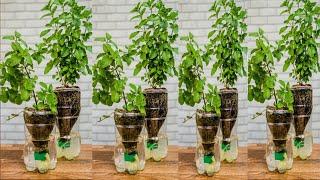 Excelente uso de garrafas Pet para suas plantas