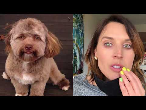 THIS DOG THAT LOOKS LIKE A HUMAN IS SCARY AS HELL! | Hey Frase