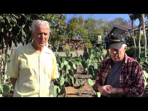 Tasty Nopal Cactus Orchard Tutorial