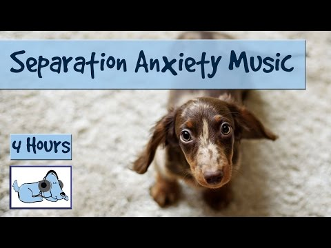 separation-anxiety-in-dogs---this-music-will-help!