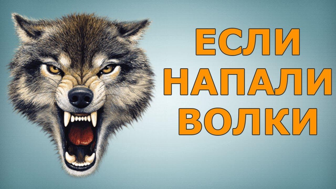 Что делать, если напали волки