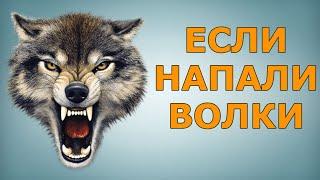 ЧТО ДЕЛАТЬ, ЕСЛИ НАПАЛИ ВОЛКИ(Как защищаться, если напали волки. Голодные волки очень опасны. Как поступать, когда стая волков атакует...., 2016-01-23T19:12:20.000Z)