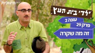 ילדי בית העץ עונה 2: זה מה שקרה