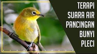Download Mp3 1 Jam Suara Pleci Terapi Air Mengalir, Cocok Untuk Perci Yg Macet Bunyi