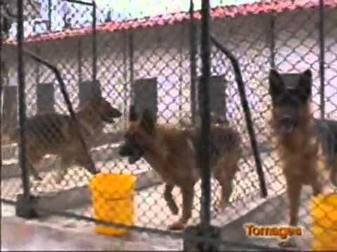 Criadero de perros youtube for Criadero de cachamas en tanques