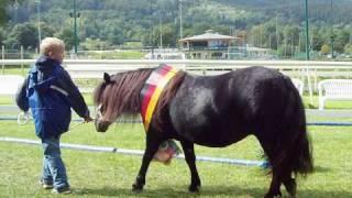 Пони - маленькие лошадки!