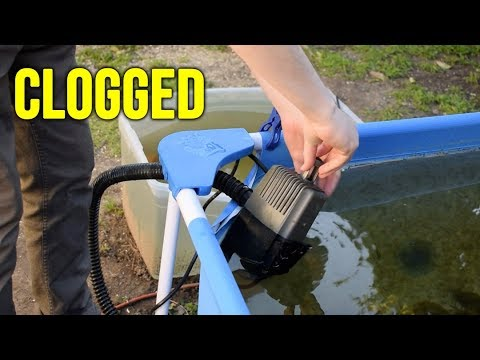 Pond Pump And Filter Maintenance!