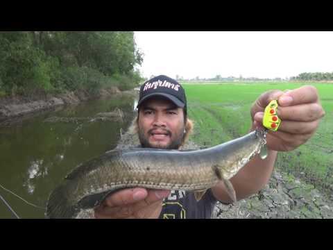 กบซุปตาร์ # คลิปตกปลาสดๆไม่มีตัดต่อต้องชม BY Yod911