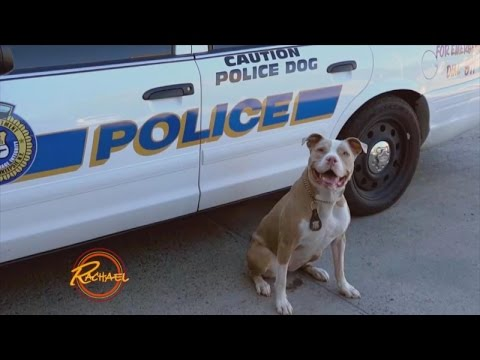 Thumbnail: New York State's First Pit Bull K9 Officer is Trying to Change Her Breed's Image