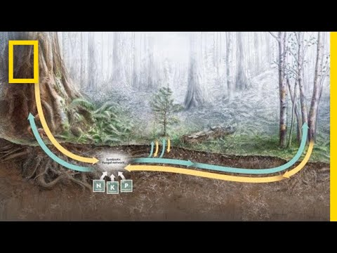 How Trees Secretly Talk to Each Other in the Forest | Decoder